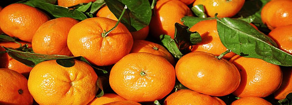 clementinen-main-slider