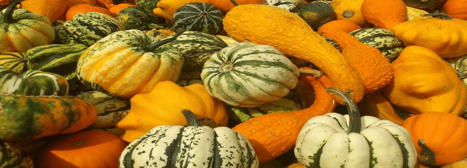 halloween-kuerbis-vielfalt